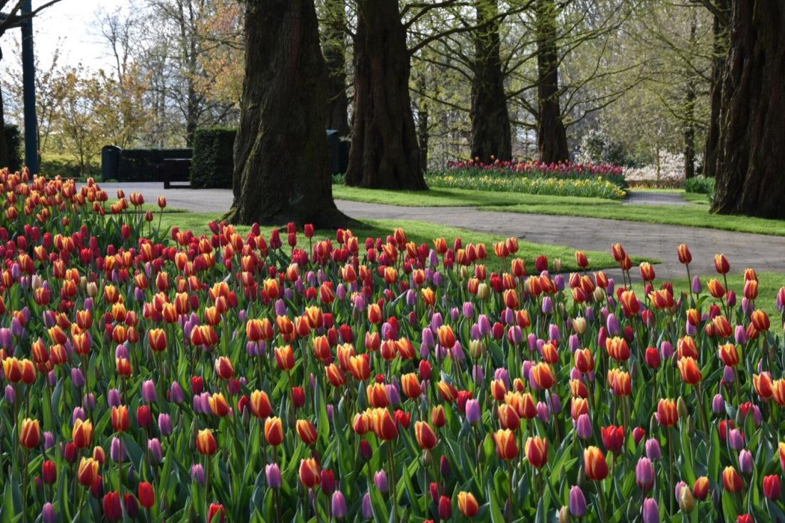 Keukenhof tulips garden – ITALIAN PASSPORT